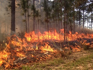 Photo of prescribed burn